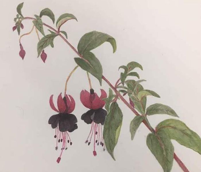 Botanical Drawing and Painting